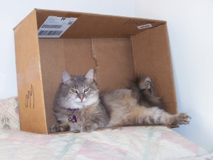 Sofie in the box