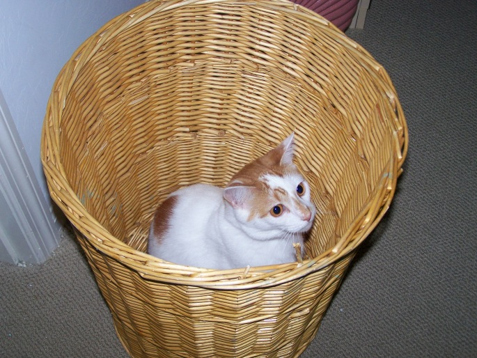 Rylie in a basket
